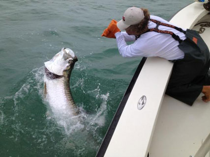 Pic of Capt Bobby Goodwin with a giant tarpon